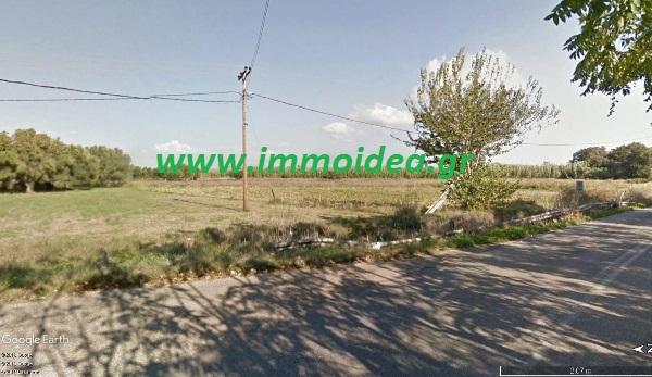 ΣΑΒΑΛΙΑ Αγροτεμάχιο 6710τμ με ελαιόδεντρα